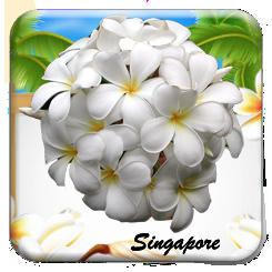 plumeria singapore