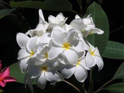 Hausten White
